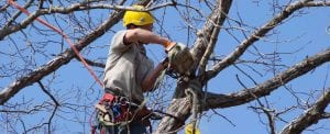 Tree Trimming/ Tree Pruning Services