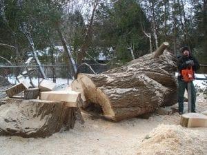 hazardous-tree-service-1