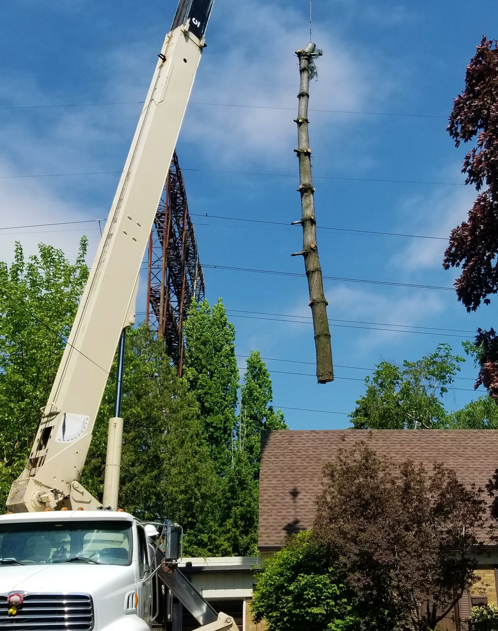 Crane-Tree-Service-Brampton