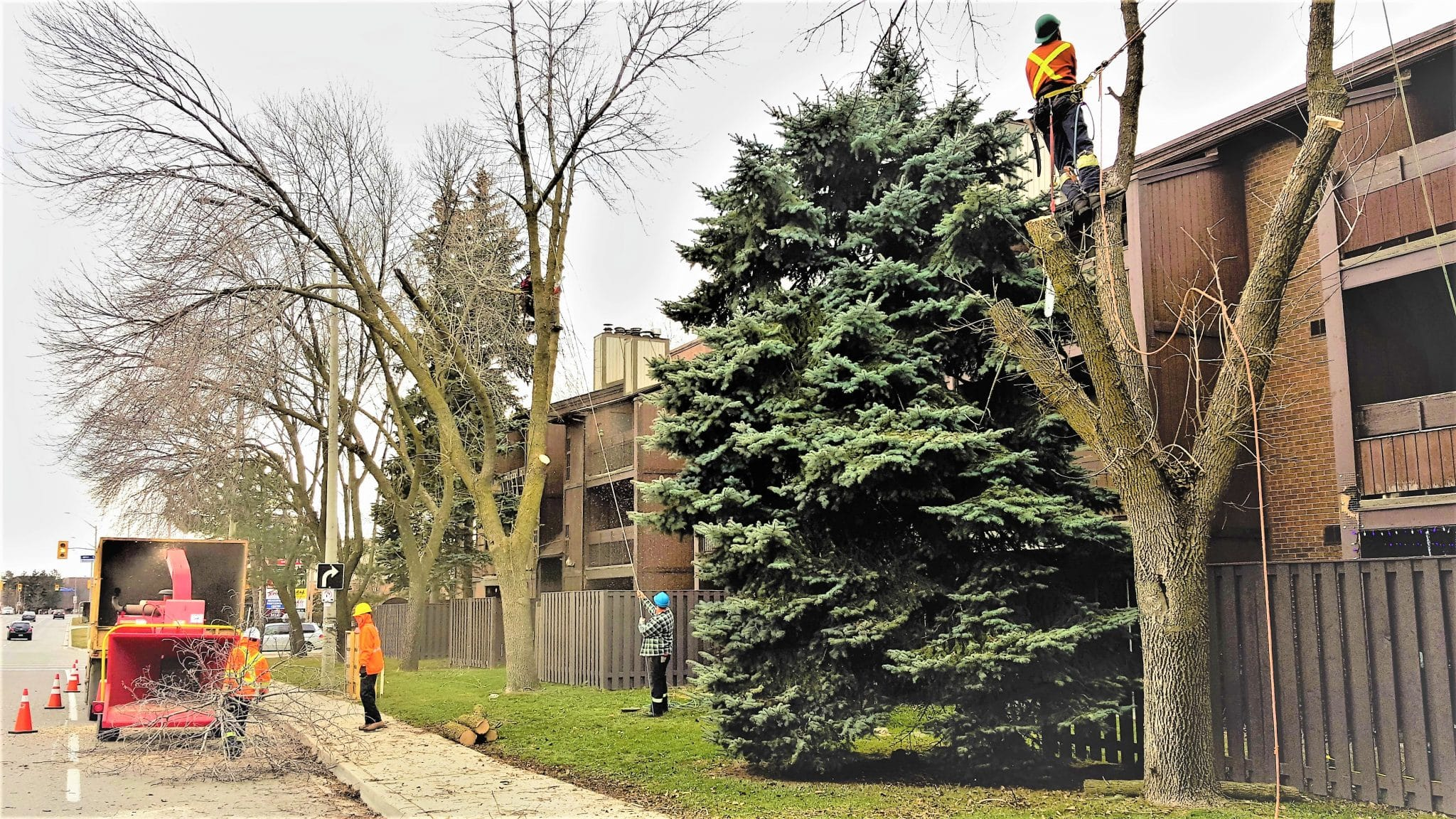 Tree Specialists, Tree Experts