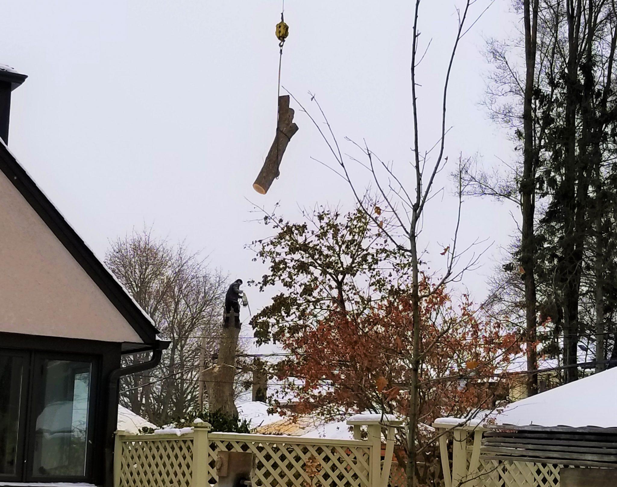 Tree-crane-services