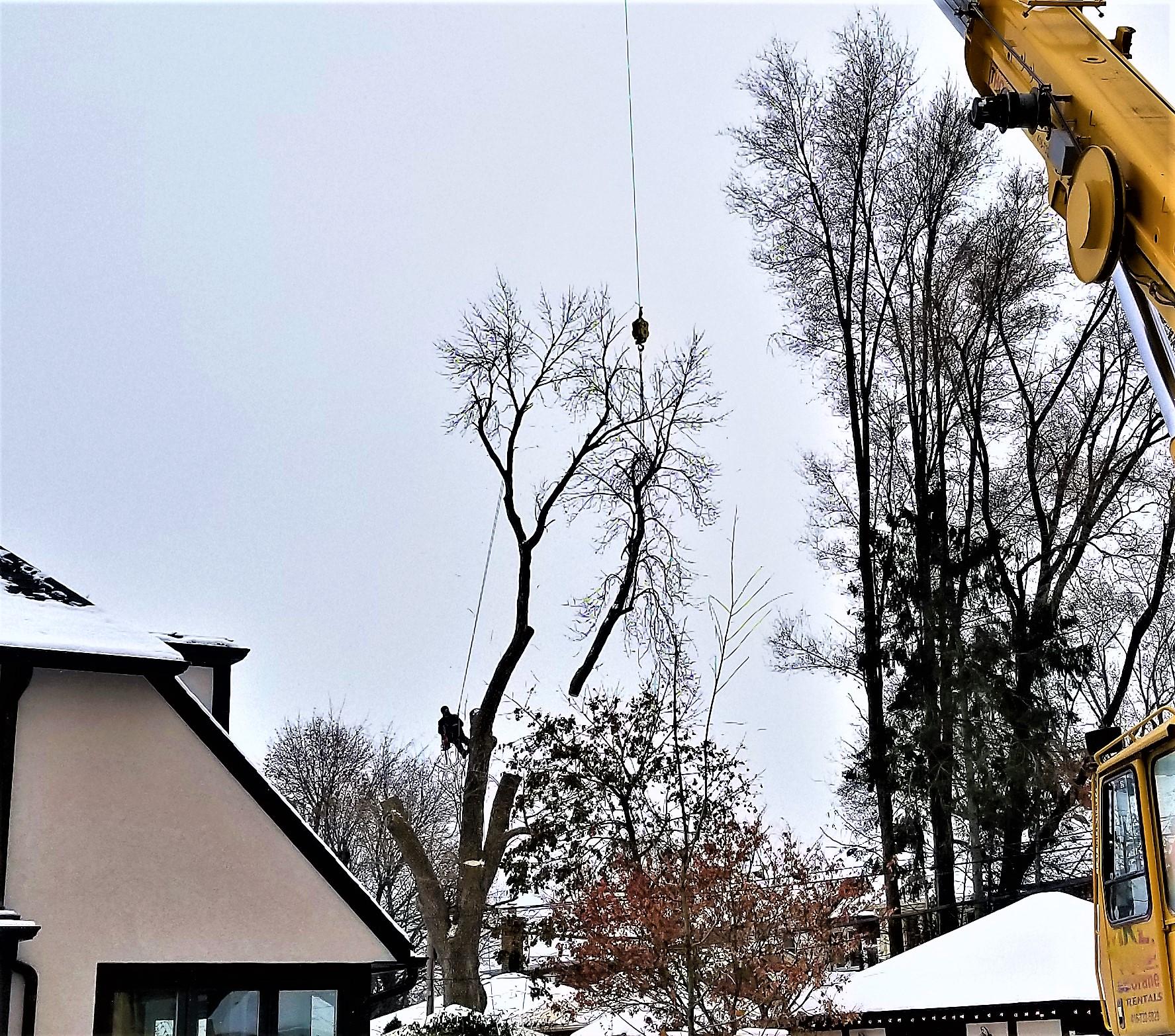 service-tree-removal-brampton