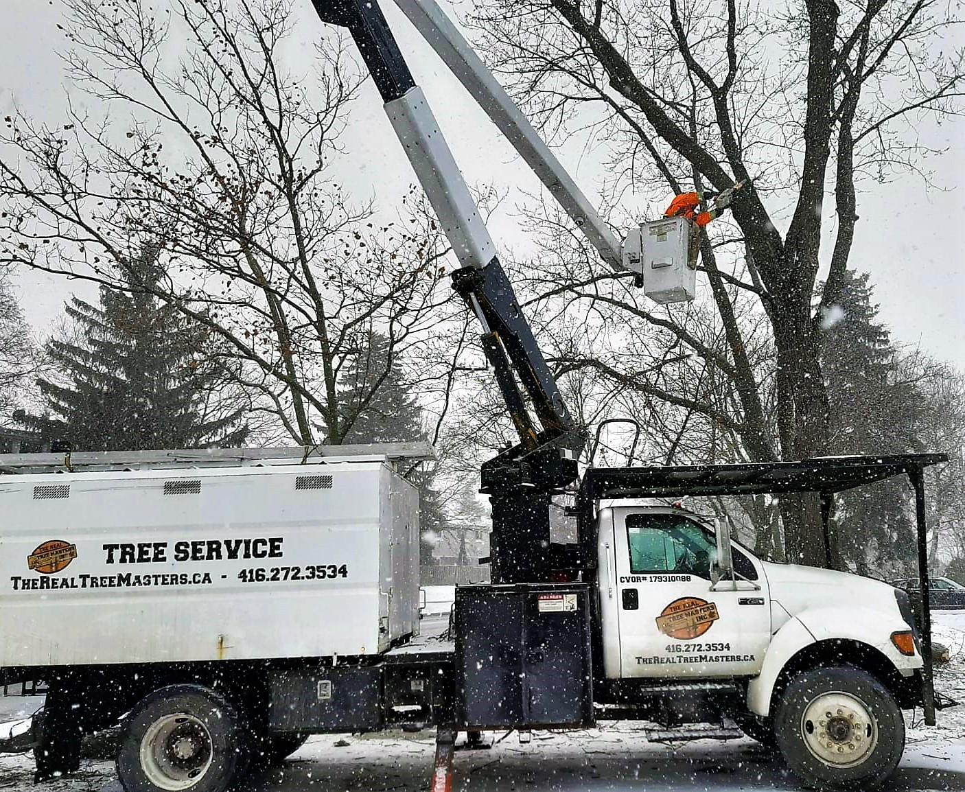 Cutting Tree in Toronto