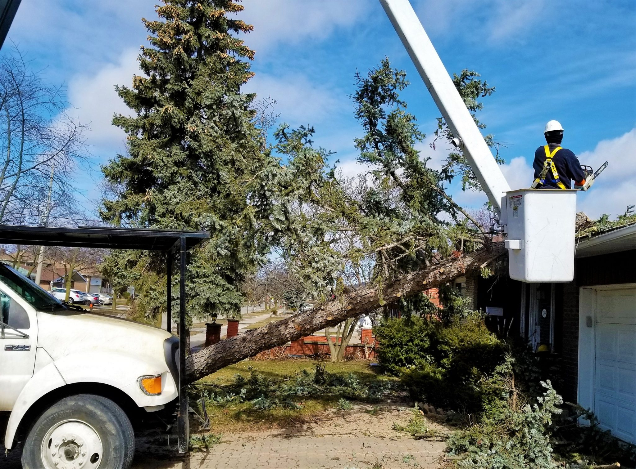 tree-services-mississauga