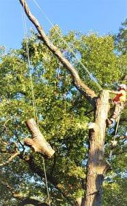 Tree Removal Mississauga