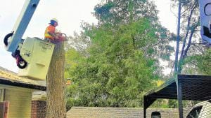 Mississauga Tree Services