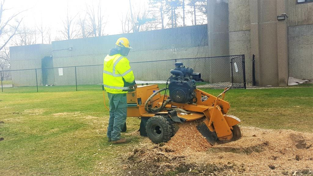 Tree Stump Removal & Stump Grinding Service | The Real Tree Masters Inc