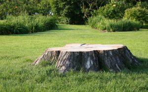 Stump Grinding & Stump Removal