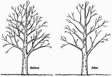 Tree Trimming and Pruning Methods