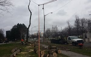 Five Reasons You Should Hire A Professional For Tree Removal Services In Toronto