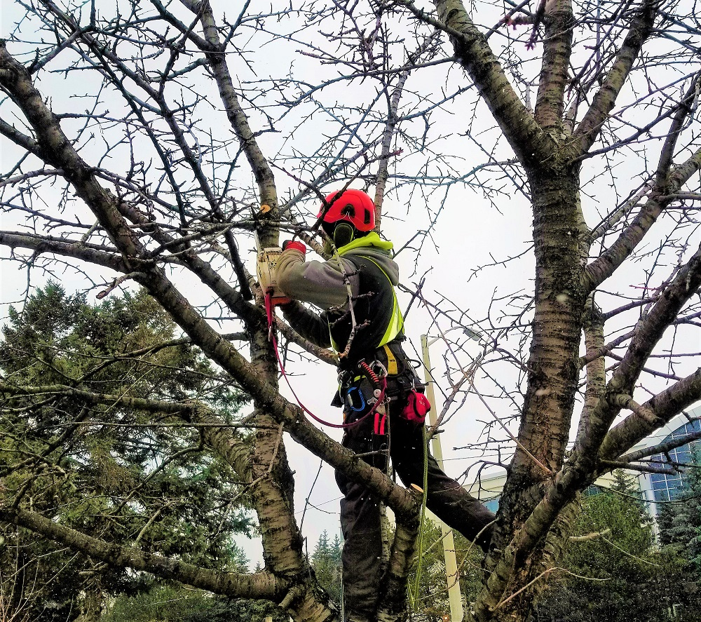 Mississauga Tree Removal