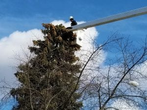 Tree Removal Vaughan
