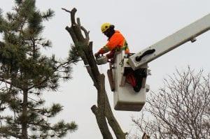 tree-cutting-Brampton