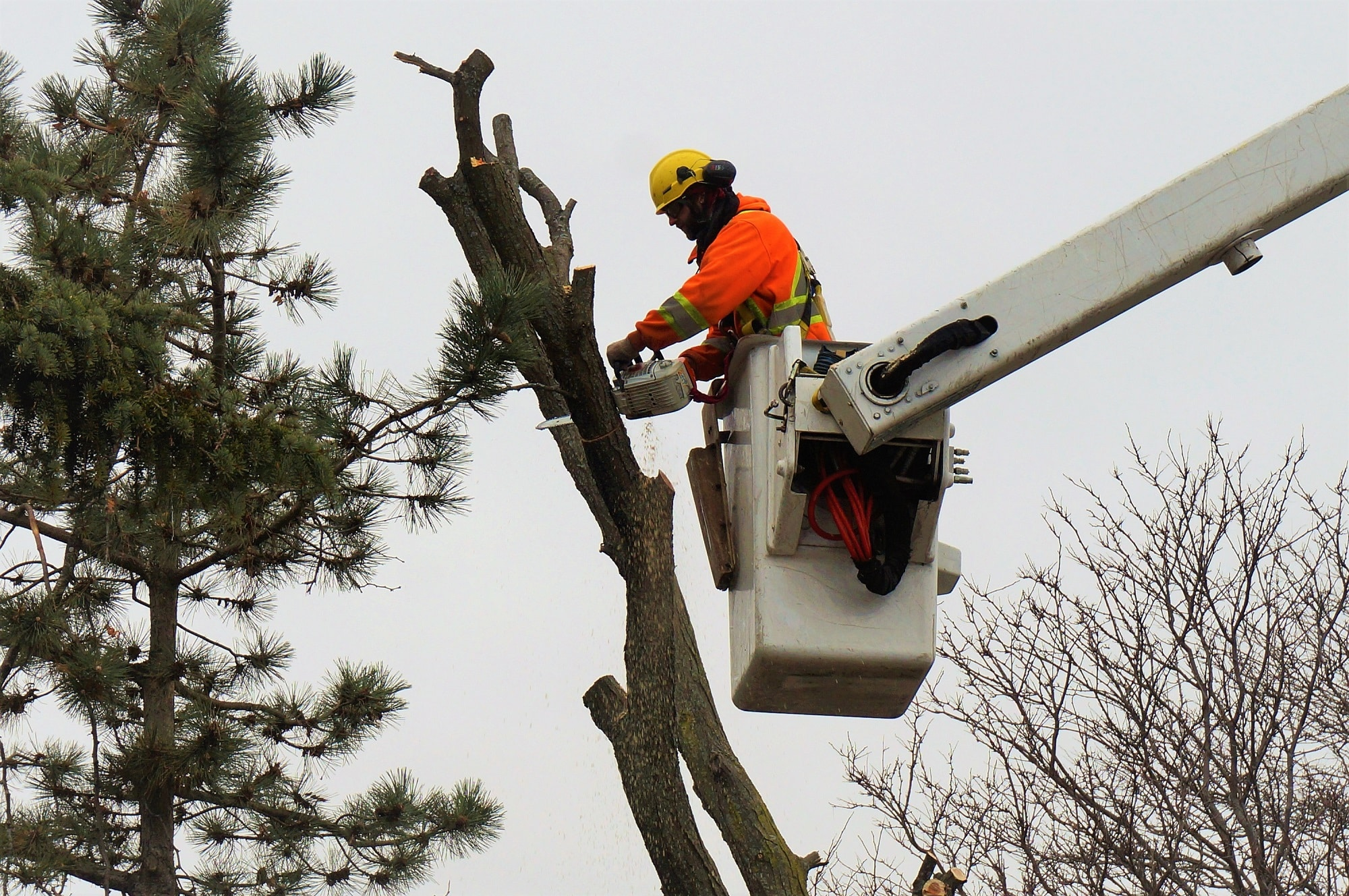 tree-cutting-Brampton