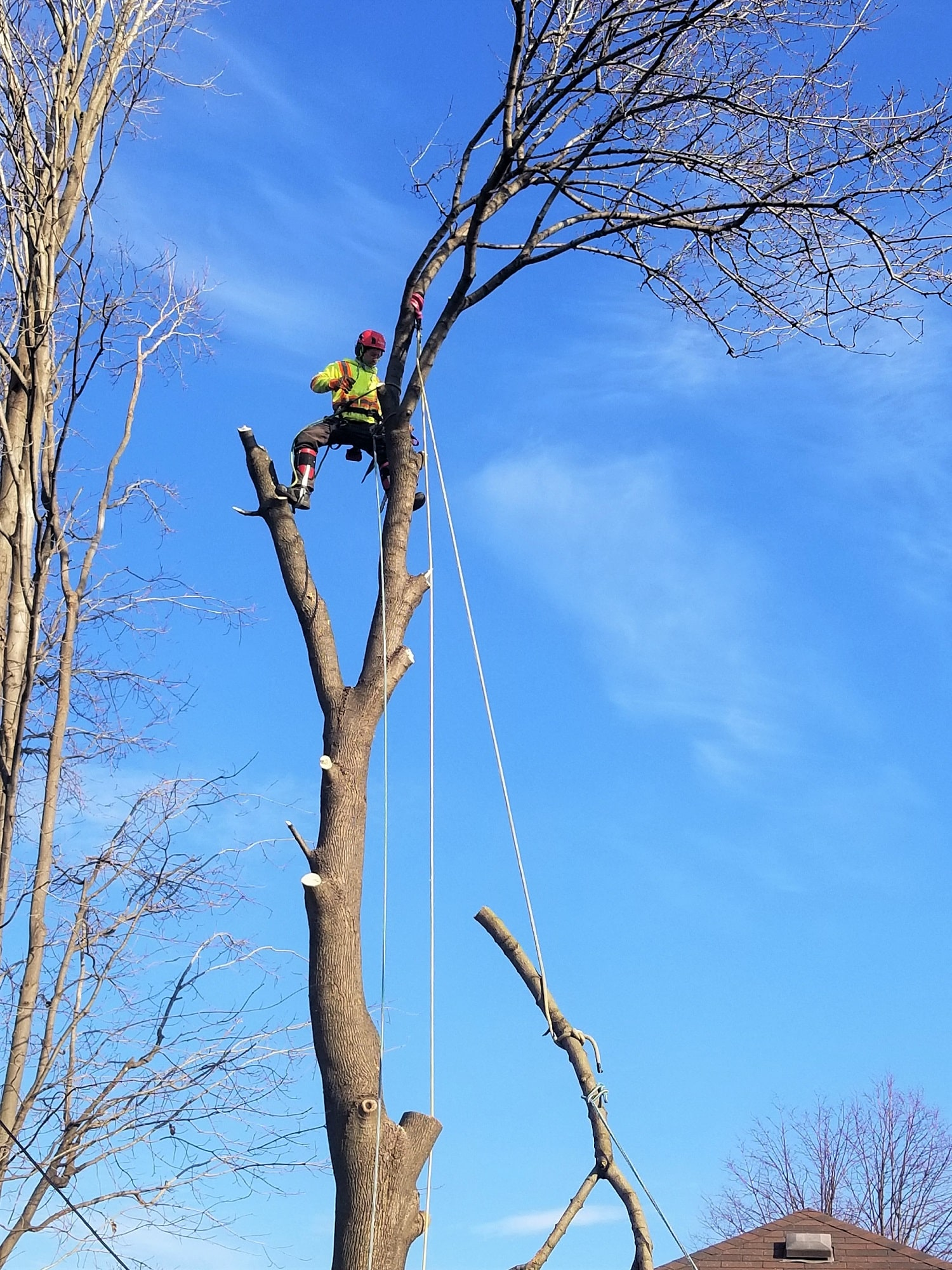 Tree Cutting Vaughan