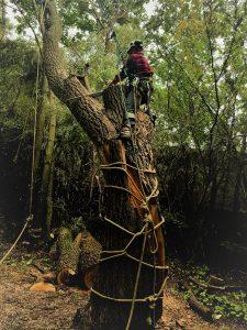 Tree removal companies Mississauga