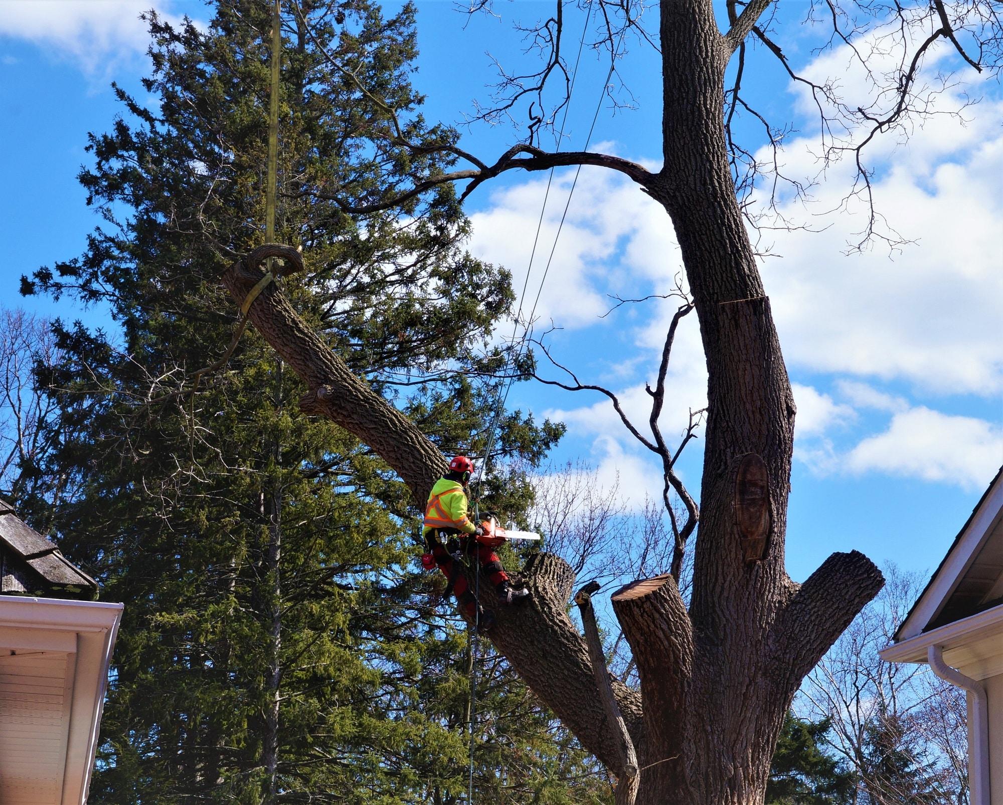 Tree Service Woodbridge