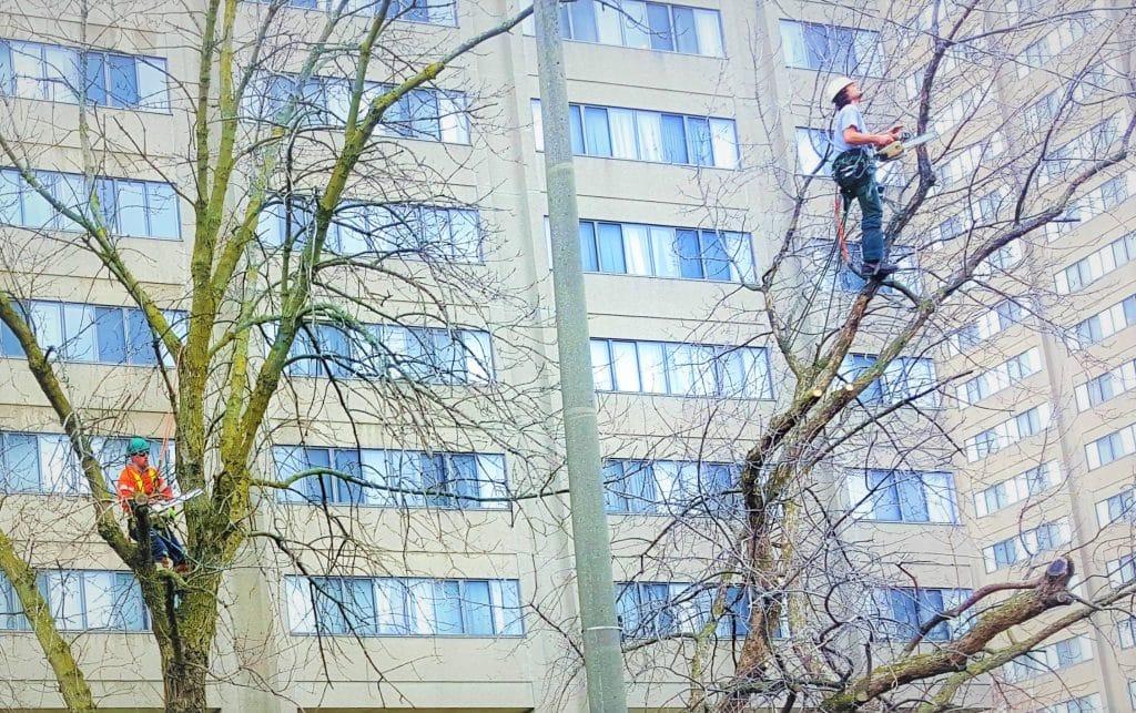 Milton-Tree-Service