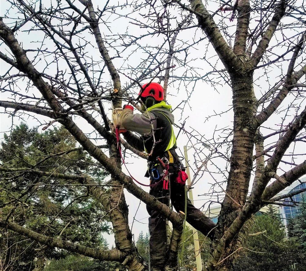Tree Trimming Service & Tree Pruning Service
