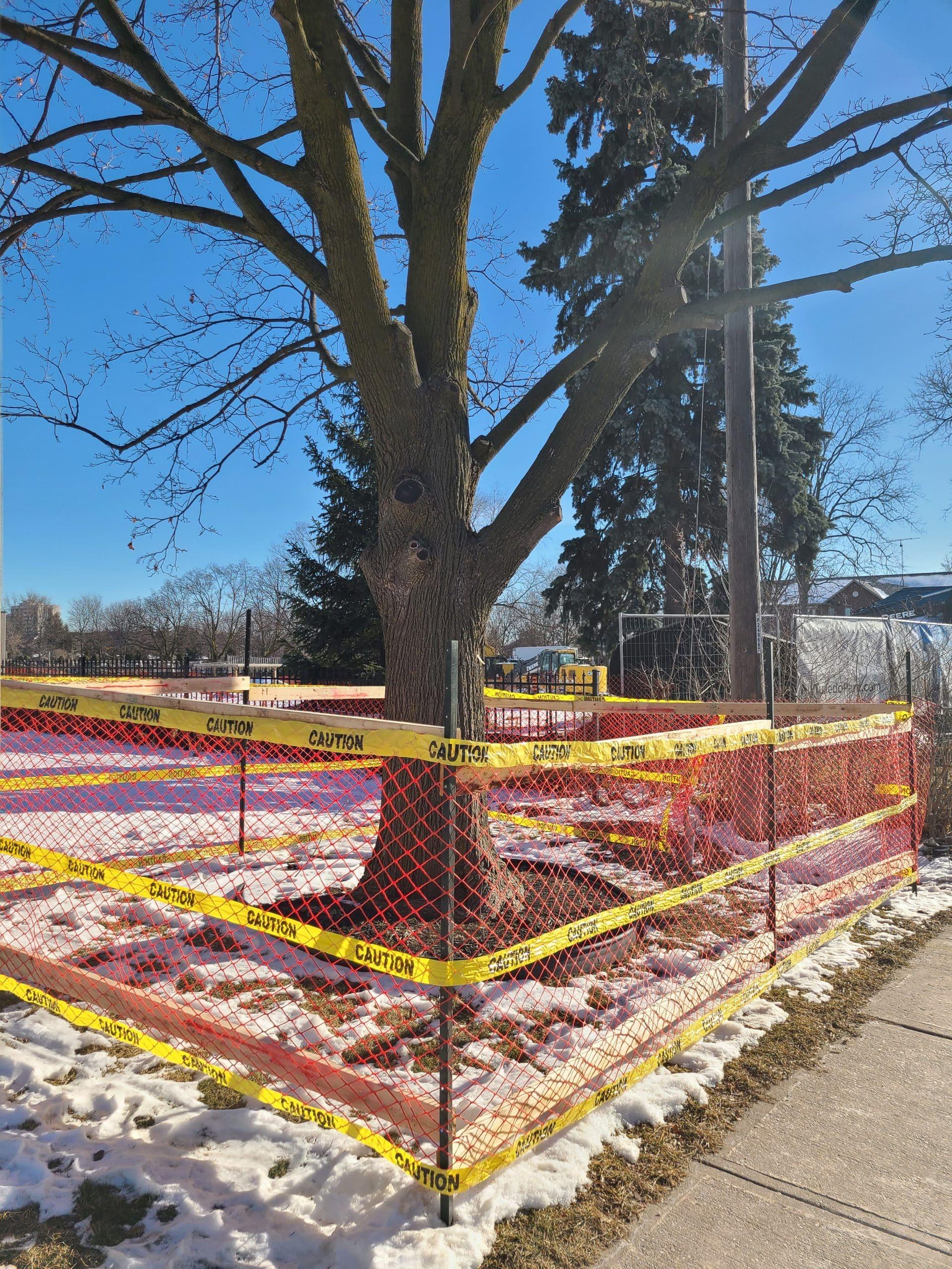 Tree protection plan