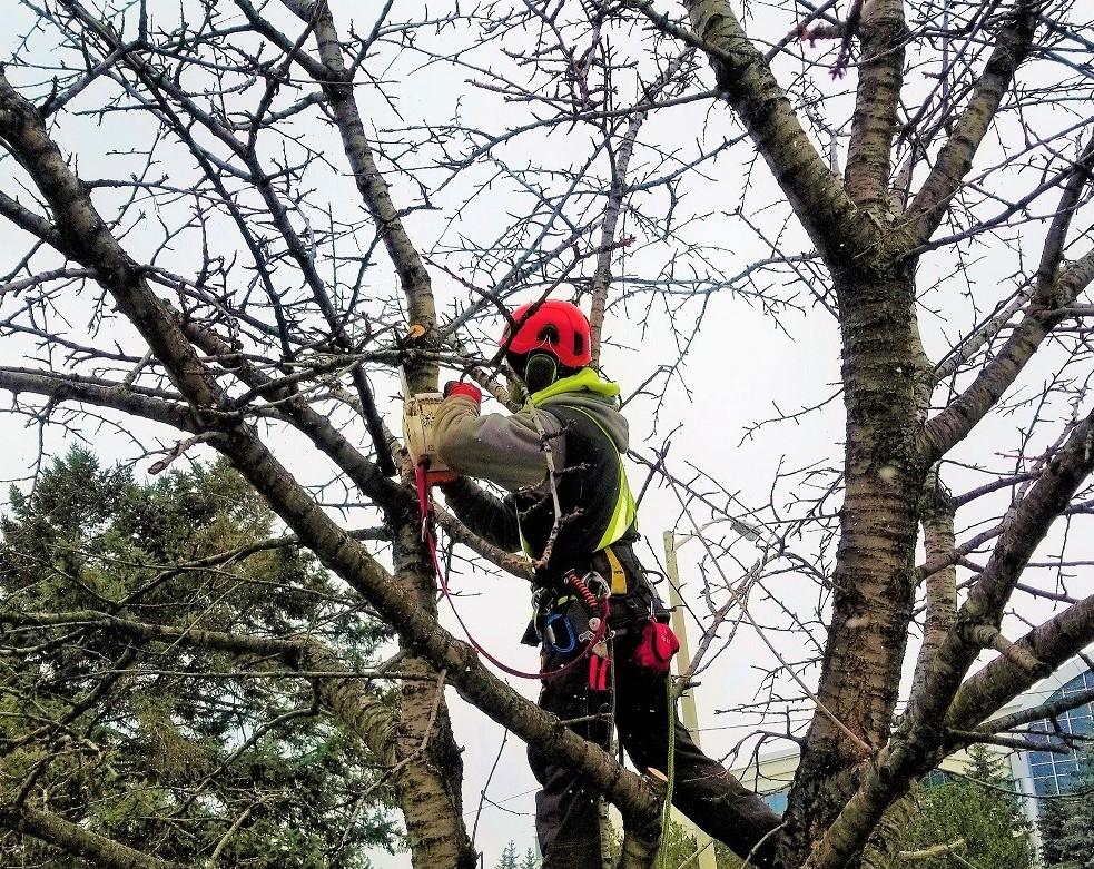 Tree Removal Burlington